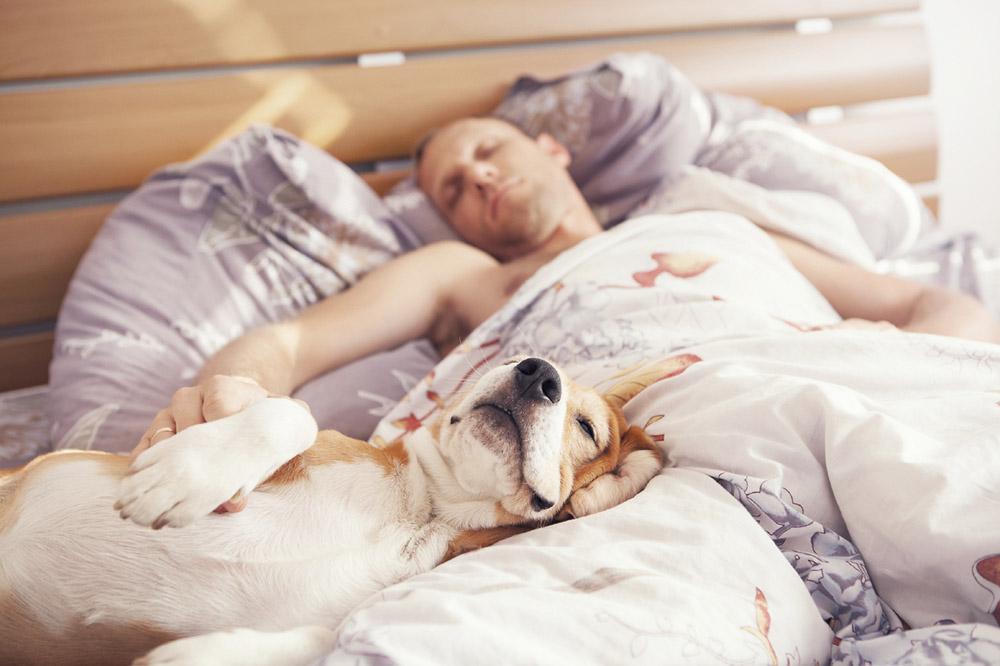 сон с собаками